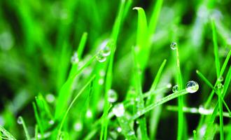 keeping grass green