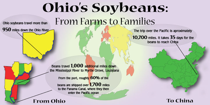 Ohio soybean infographic