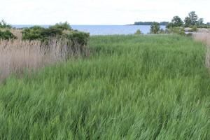 algae.wetland