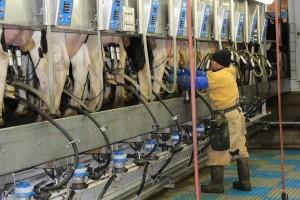 milkers