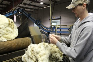 wool grading 1