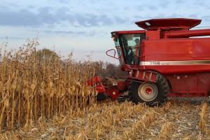 Justin Esselburn, combining corn.