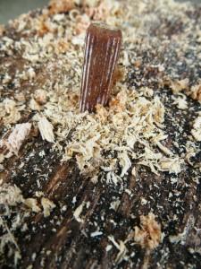 Plug mushroom spawn