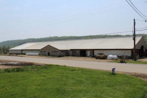 The cow barn at Spruce Row Farm.