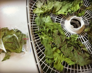 dehydrated greens