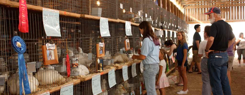 Ohio cancels all poultry shows to minimize bird flu risk ...
