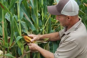 corn check